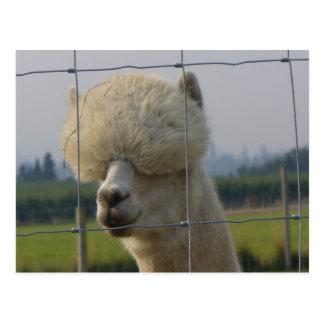 Postal amistosa de la alpaca