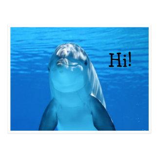 Postal amistosa de la foto del delfín