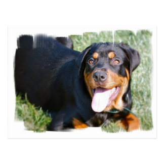 Postal amistosa de Rottweiler