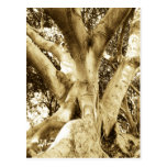Postal amistosa del vintage de Eco del árbol retro