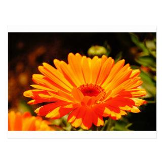 Postal anaranjada de la flor
