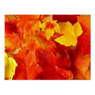 Postal anaranjada de la fotografía de la caída de