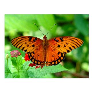 Postal anaranjada de la mariposa