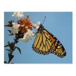 Postal anaranjada de la mariposa de monarca