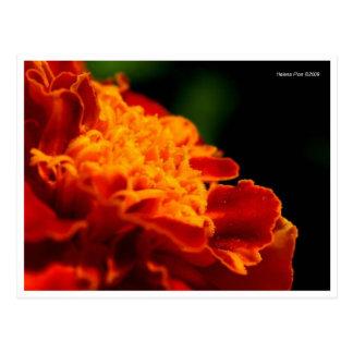 Postal anaranjada roja macra de la flor