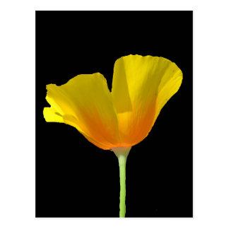 Postal anaranjada y amarilla de la amapola