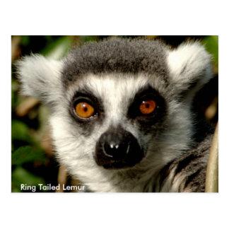 Postal Anillo-Atada del Lemur