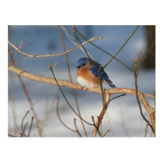 Postal animal de la foto de la naturaleza del Blue