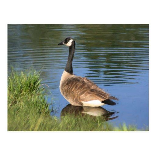 Postal animal del arte del ganso de Canadá