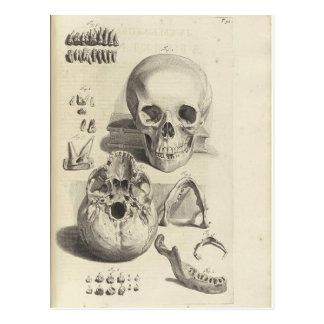 Postal antigua de la anatomía del cráneo de la imp