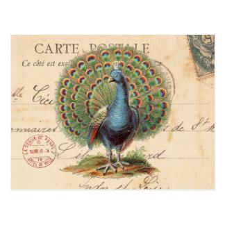 Postal antigua del pavo real del vintage