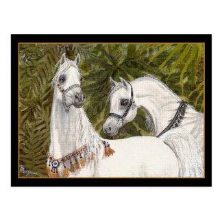 Postal árabe del caballo de la arboleda de la palm