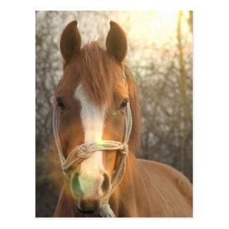 Postal árabe del caballo de la castaña