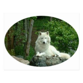 Postal ártica del lobo