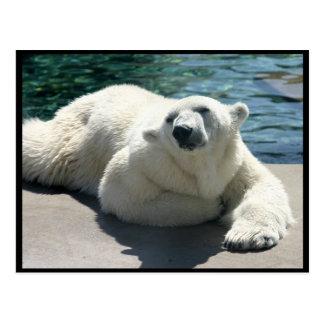 Postal ártica del oso polar