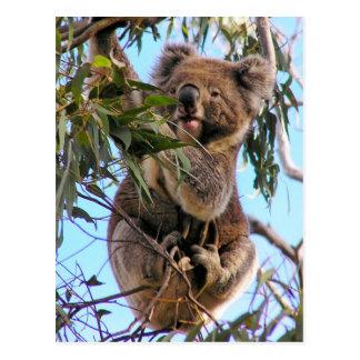 Postal Australia de la koala