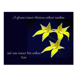 Postal australiana amarilla de la flor de la