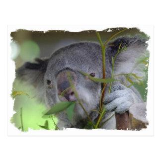 Postal australiana de la koala