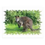 Postal australiana del canguro