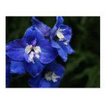 Postal azul de la flor del Delphinium