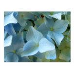 Postal azul de la flor II del Hydrangea