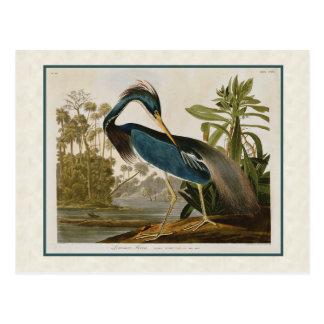 Postal azul de la garza de Luisiana del vintage de