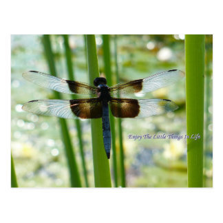 Postal azul de la libélula