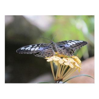 Postal azul de la mariposa de las podadoras