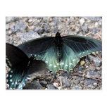 Postal azul de las mariposas