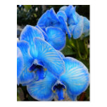 Postal azul de las orquídeas de la mística