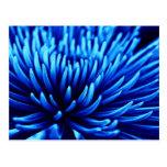Postal azul del arte de la flor del crisantemo
