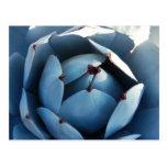 Postal azul del cactus