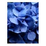 Postal azul del Hydrangea