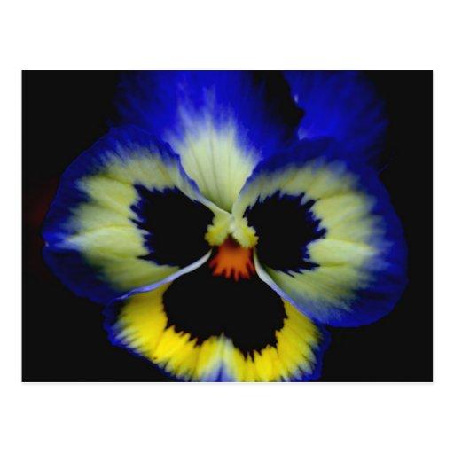 Postal azul intrépida de la fotografía de la flor