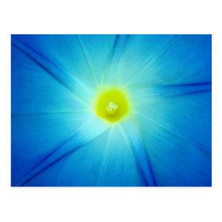 Postal azul LowRollerAcres de la flor