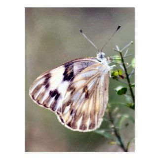 Postal blanca a cuadros de la foto de la mariposa