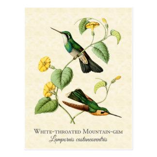 Postal blanca del arte del colibrí de la gema de