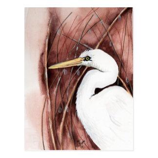 postal blanca del egret