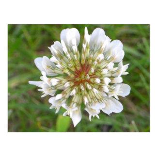 Postal blanca del espacio en blanco del wildflower