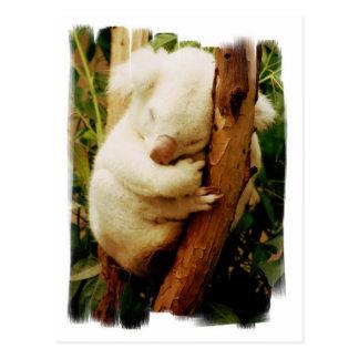 Postal blanca del oso de koala