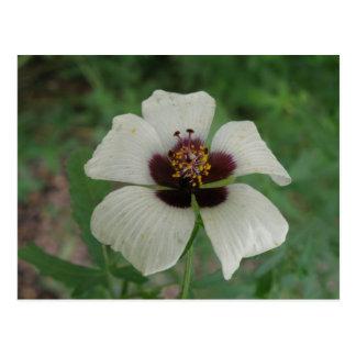 Postal blanca y púrpura del Passionflower