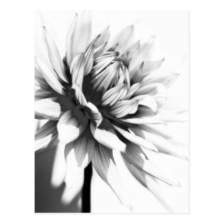 Postal blanco y negro de la flor