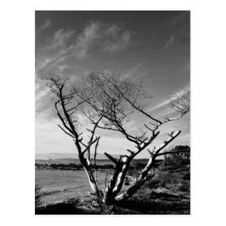 Postal blanco y negro del lago sand, Oregon