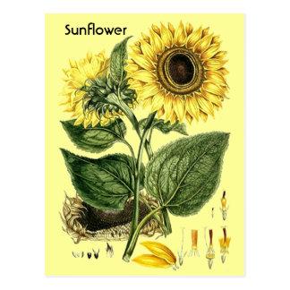 Postal botánica de la primavera del jardín del