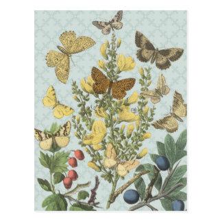 Postal botánica de las mariposas del vintage…