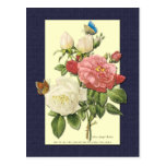 Postal botánica de los rosas blancos y rojos