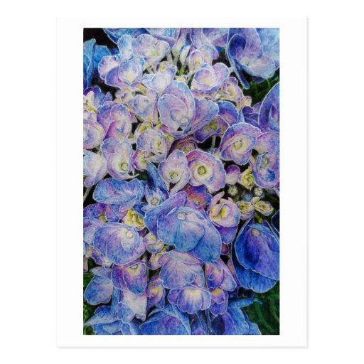 Postal botánica del arte del Hydrangea azul