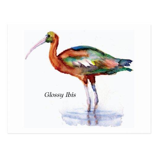 Postal brillante de Ibis