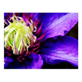 Postal brillante del arte de la flor del clematis