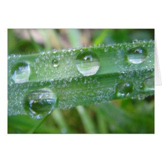 Postal brizna de hierba con Wassertropfen, en Tarjeta De Felicitación